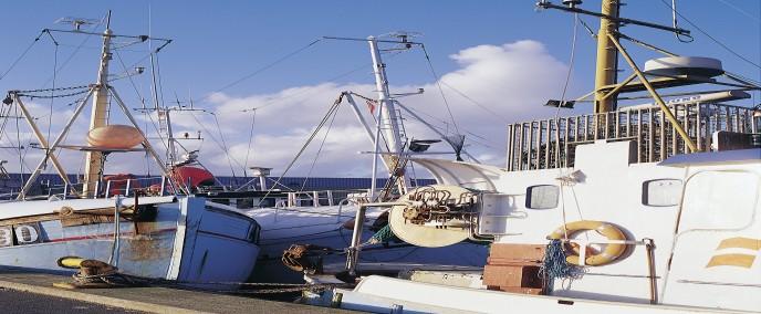 Industria Pesquera