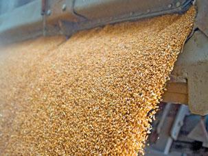 Food Industry (agri-food