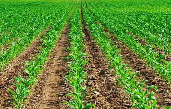 1572_fertilizer_mining_1200