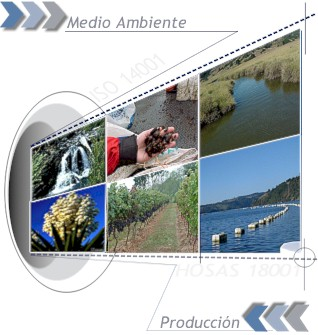 Ambiental, Proyecto