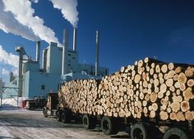 Biomass, Wood, Paper