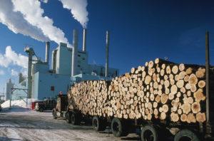 Pulppaper-plant-logs