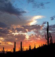 Arizona (5