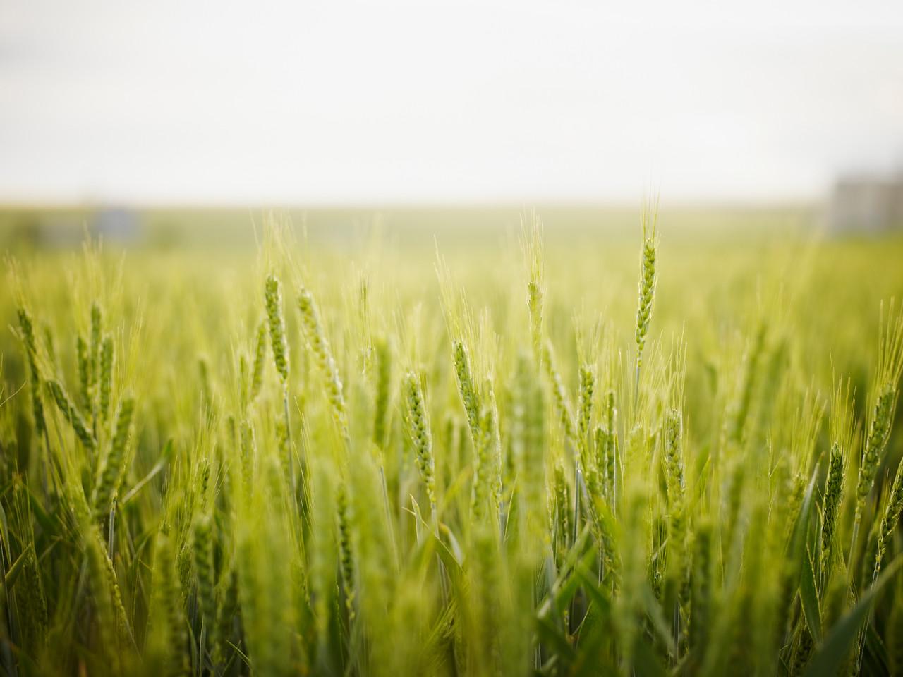 3762_grain-landscape-47