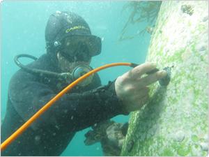 Inspección Submarina