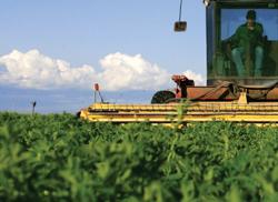 Potash, Fertilizers