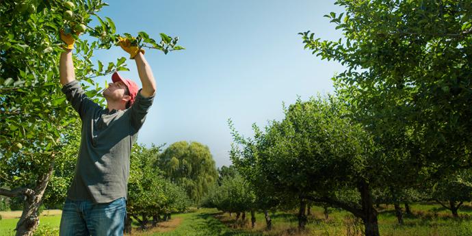 Protección Del Cultivo De Cítricos